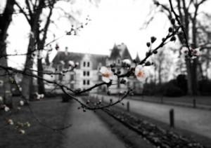Chateau Fleur (la brume de l'hiver)