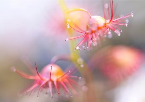 $335 Sundews Freycinet