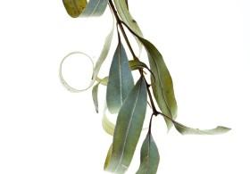 Botanicals-1